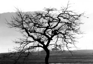 lifeless-tree